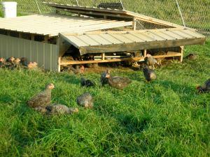Little birds in the field