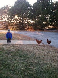 Milo and the yard birds